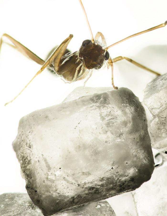 20_Hormigas Sobre Cristal De Azúcar, de Raúl González.