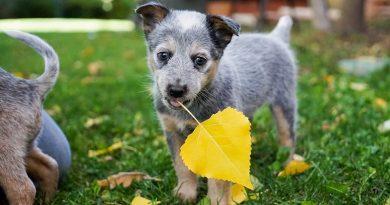 Vacunas recombinantes, aliadas para la salud de tu mascota
