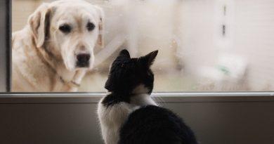 México da el primer paso para certificar servicios veterinarios de calidad en pro de las mascotas