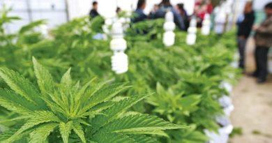 Anuncian el CANNAMEXICO 2019: cannabis medicinal e investigación