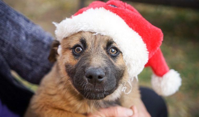 Piden a Santa Claus y a los Reyes Magos no regalar animales de compañía