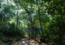 Propone Natura cultivo de palma como alternativa al monocultivo