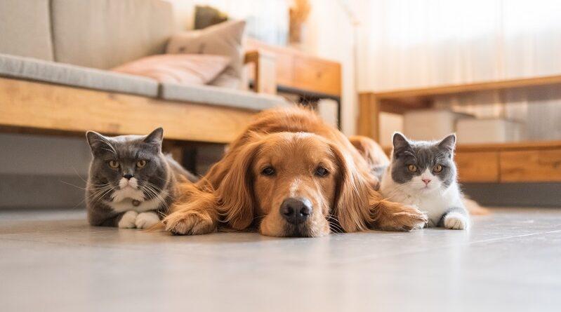¿Cómo ayudar a sanar las heridas de tus mascotas?